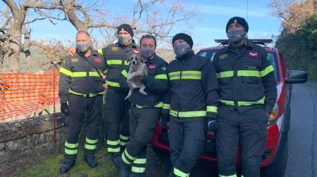 altomonte, cagnolina salvata, vigili del fuoco, Cosenza, Cronaca