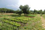 Manca l'acqua per l'irrigazione a Isola Capo Rizzuto. Agricoltori pronti alla mobilitazione