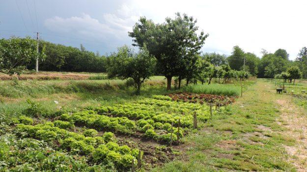 irrigazionbe campi, isola capo rizzuto, Nicodemo Podella, Catanzaro, Economia