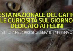 Festa nazionale del gatto: le curiosità sul giorno dedicato ai felini Istituita nel 1990, si celebra il 17 febbraio - Ansa