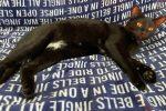 Vibo, gatto si arrampica sull'albero e rimane incastrato. Salvato da un gruppo di ragazzi - VIDEO