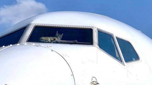aereo, gatto, tel aviv, Ido Wachtel, Sicilia, Mondo