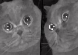 Il gattino con le lacrime agli occhi davanti alla telecamera di sorveglianza Visto che si tratta di un gatto, il video - ovviamente - è parecchio cliccato. Arriva dalla Cina - CorriereTV