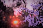 Meteo, nei prossimi giorni al Sud un anticipo di primavera