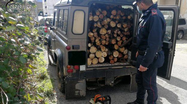 cerzeto, furto di legname, Cosenza, Cronaca
