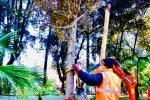 La piantumazione degli alberi nella Villa vecchia di Cosenza