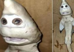 Un cucciolo di squalo mutante dal volto umano: le immagini fanno il giro del web La scoperta di un pescatore in Indonesia - CorriereTV