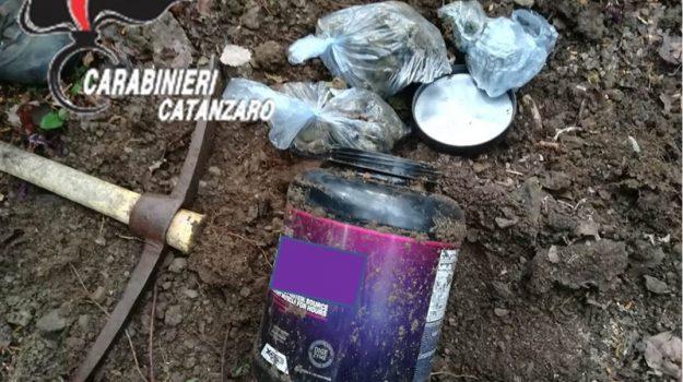 arresto, decollatura, marijuana, Catanzaro, Cronaca