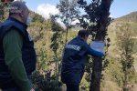 Cosenza, abusivismo e danno ambientale: sequestrati 48 ettari di bosco a Malvito