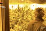 Torino, fabbrica di marijuana in provincia: quattro arresti