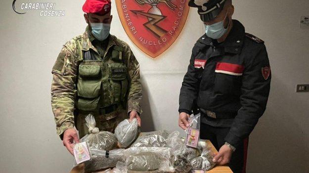 arresto, cetraro, droga in casa, Cosenza, Cronaca