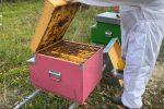 """Coldiretti Reggio Calabria: """"Sos, apicoltura in difficoltà in tutta la provincia"""""""