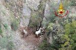 Stalettì, cavallo finito in un dirupo recuperato dopo la notte dai vigili del fuoco - VIDEO