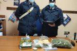 Piante di marijuana sul balcone, arrestati due coniugi a Santa Maria del Cedro
