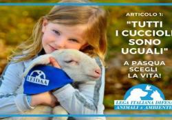 «Ingiustificabile la mattanza di agnelli, quest'anno scegliamo la vita» Il video appello di Michela Vittoria Brambilla, presidente della Lega Italiana Difesa Animali e Ambiente, - Corriere Tv
