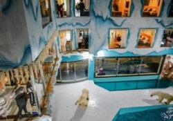 La polemica: l'hotel cinese con gli orsi polari esibiti ai clienti 24 ore su 24 Il nuovo albergo è stato inaugurato a Harbin: gli orsi possono essere osservati in un habitat artico ricreato in maniera artificiale - CorriereTV
