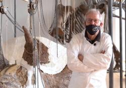 La ricostruzione del grande triceratopo I reperti scoperti in Montana - Corriere Tv