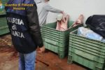 Fattorie lager nel Messinese, animali uccisi con crudeltà: sequestri e denunce