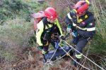 Stalettì, cavallo spaventato dai cinghiali cade in un dirupo: salvato dai pompieri