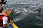 Ponza, avvistata per la prima volta una balena grigia in Italia