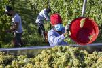 Agricoltura, al via programma di formazione per inclusione sociale