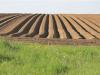 Agricoltura, in calo le superfici cerealicole