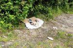 Arena, quattro cuccioli salvati dai carabinieri