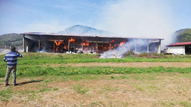 campotenese, incendio fienile, Cosenza, Cronaca