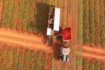 Cibo, un terzo nel mondo è prodotto da piccoli agricoltori