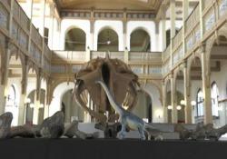 """Cile, svelato l'""""Arackar licanantay"""": lo scheletro del dinosauro del deserto È stato scoperto nell'area dell'Atacama, nel nord del Paese - Ansa"""