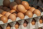 Confagricoltura, nel 2020 ogni italiano ha consumato 219 uova