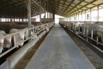 """Consumo di carne, IntercarneItalia: """"Dall'UE un questionario tendenzioso"""""""
