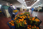 Cresce l'export agroalimentare extra Ue