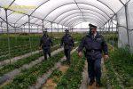 Incassavano indebitamente l'indennità agricola, denunciate 67 persone nel Cosentino