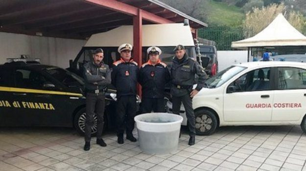 bianchetto, guardia costiera, guardia finanza, roseto capo spulico, sequestrato, Cosenza, Cronaca
