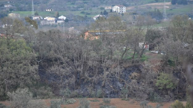 castrovillari, incendio, macchia mediterranea, querce, Cosenza, Cronaca
