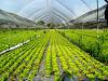 L'agroindustria guarda alla ripresa post-Covid