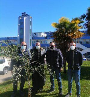 Dieci alberelli d'ulivo piantati all'ospedale di Lamezia Terme