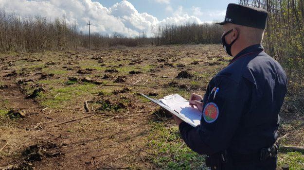carabinieri forestale, cinque arresti, melicuccà, Reggio, Cronaca