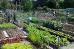 Zona rossa, la cura degli orti è consentita anche fuori dal comune e dalla regione