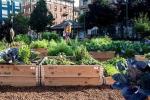 Per 44% italiani frutta e verdura coltivata in giardini e orti urbani