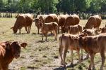 Per gli allevamenti bovini arriva la sfida della transizione ecologica
