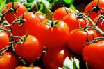 Stop frodi, più 17% import pomodoro dalla Cina