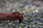 Ue, aiuti verdi a piccole aziende i nodi per riforma della Pac
