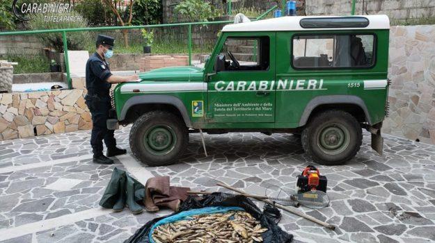 asp crotone, carabinieri, cotronei, trote, Catanzaro, Cronaca