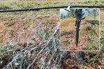 Saranno ripiantate le 200 piante di ulivo distrutte da ignoti a marzo a Castrovillari