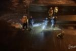 Londra: balena nel Tamigi, i tentativi di salvataggio VIDEO