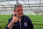 """'Cipolla tour' in Calabria, Spirlì visita le aziende: """"Un settore che dà lavoro"""" VIDEO"""