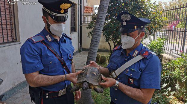 gallico, reggio calabria, tartaruga ritrovata, Reggio, Cronaca