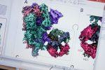 """Covid, test sul vaccino """"universale"""": fermerebbe tutti i coronavirus incluso il Sars-Cov2"""